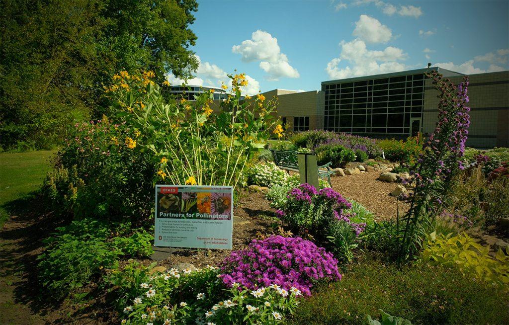 polinator garden